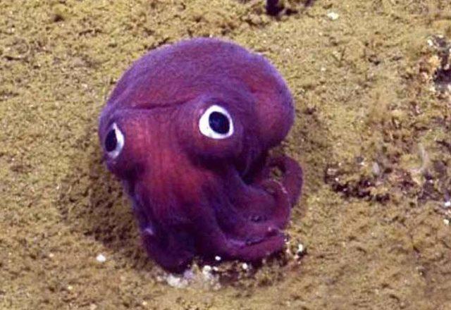 Calamar como el de la película Finding Nemo