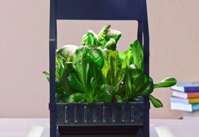 IKEA vende kits de cultivo hidropónico para interior
